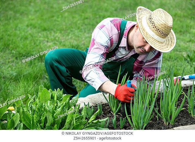 Russia. Belgorod region. Spring work in the orchard