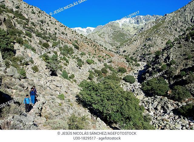 Hikers walking in Tejea Valley in Sierra de Gredos Regional Park  Candeleda  Ávila province  Castilla y León  Spain