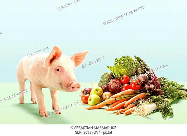Piglet near fresh vegetables in studio