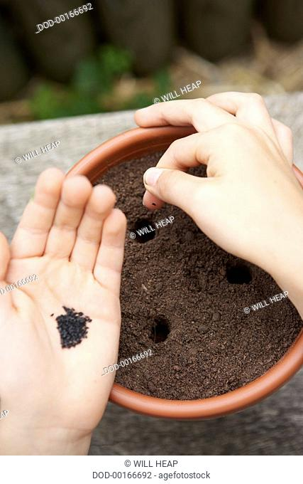 Hand planting seeds in holes in soil in plant pot