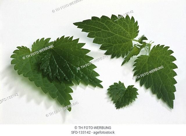 Young nettle leaves on white background (2)