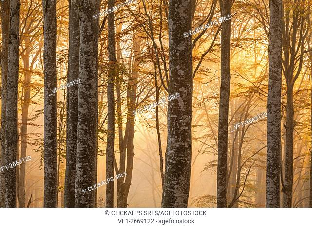 Cansiglio forest, Veneto, Italy. Morning into the forest
