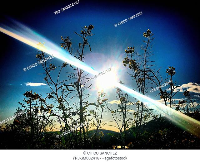 The sun shines behind plants in Prado del Rey, Sierra de Grazalema, Andalusia, Spain
