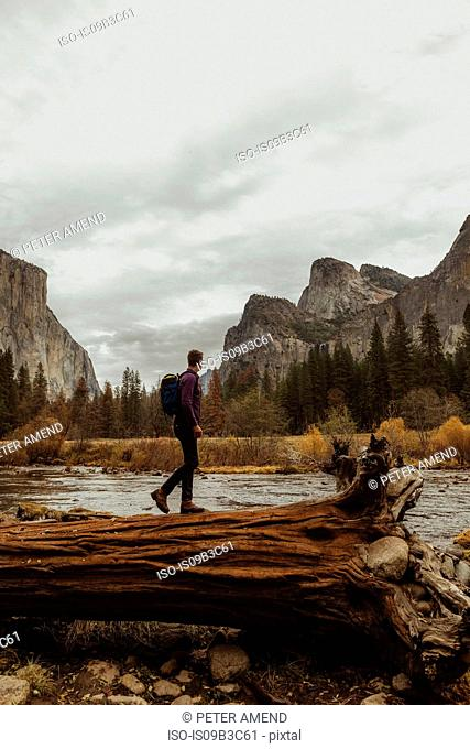 Male hiker on top of fallen tree trunk looking out at mountains, Yosemite National Park, California, USA