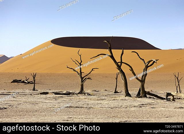 Dead Acacia Trees in Hiddenvlei, Namib Naukluft Park, Namibia