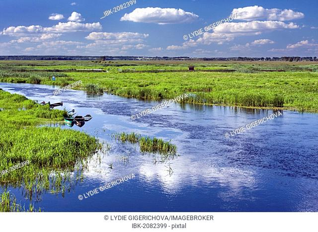 Narew River near Waniewo village, Narwianski National Park, Poland, Europe