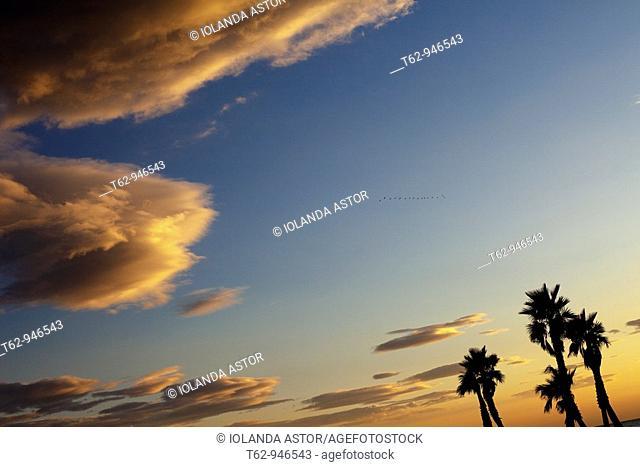 Orange clouds in the sky  Birds in flight  Palm trees on the beach at sunset  Costa Dorada, Tarragona