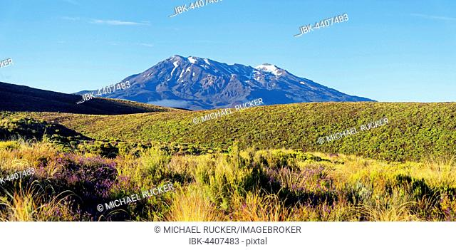 Snow-capped volcanic Mount Ruapehu in Tongariro National Park, Manawatu-Wanganui, North Island, New Zealand