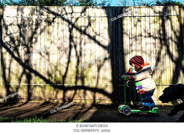 Male toddler on push scooter in sunlit park