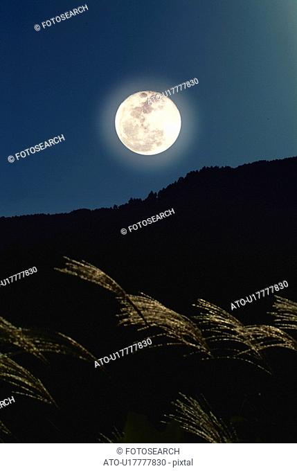 The full moon and silver grass, low angle view, Shiga prefecture, Japan