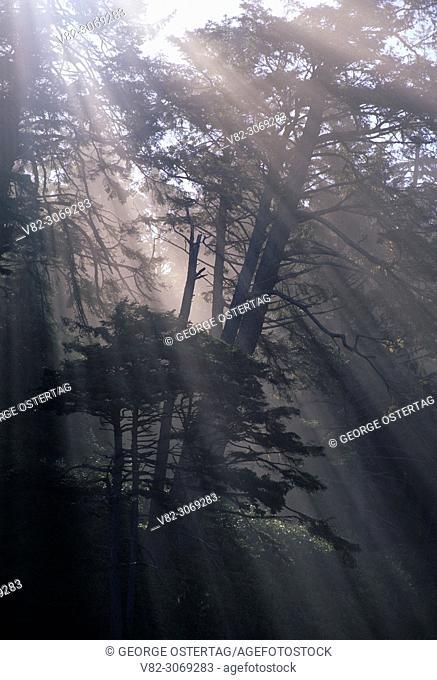 Coastal fog with sun rays at Ruby Beach, Olympic National Park, Washington