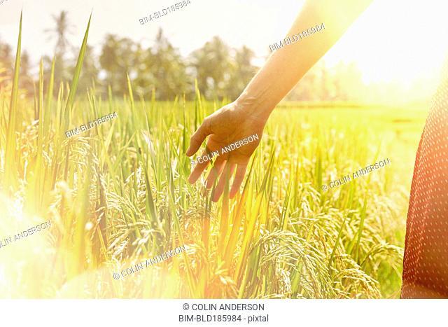 Hand of Pacific Islander woman in field
