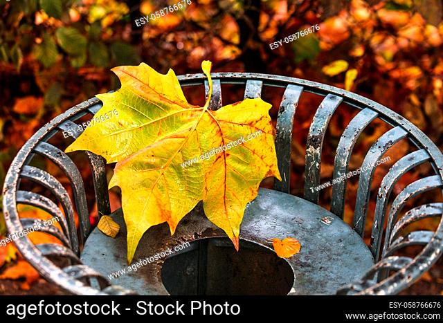 maple leaf on garbage can, in autumn