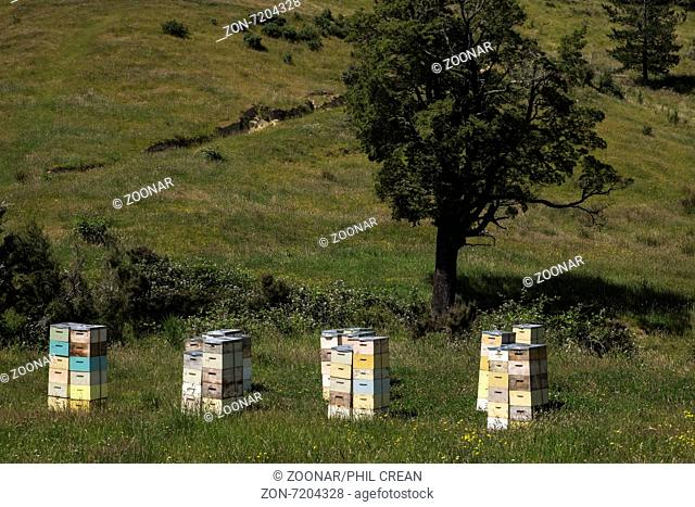 Beeehives near Mount Lyfford, Canterbury, New Zealand