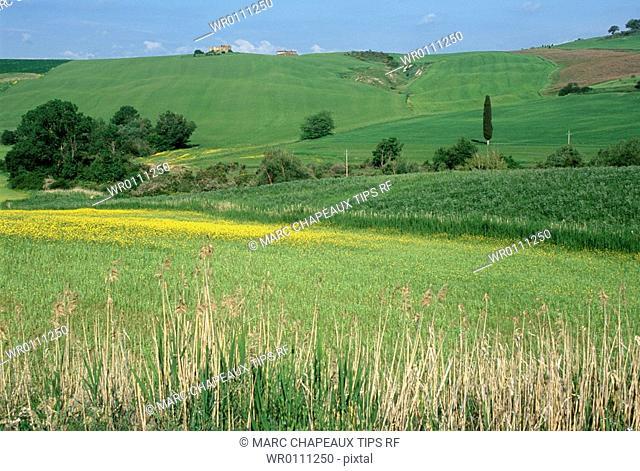 Italy, Tuscany, Orcia Valley, landscape