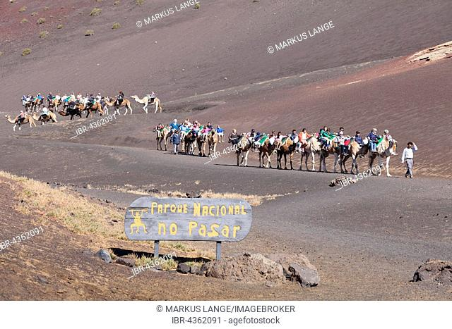 Tourists riding on dromedaries in Timanfaya National Park, Lanzarote, Canary Islands, Spain