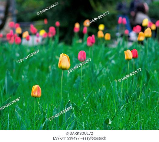 flowers summer South field amazing color love