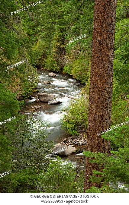 Whychus Creek along Whychus Creek Trail, Whychus Creek Wild and Scenic River, Deschutes National Forest, Oregon
