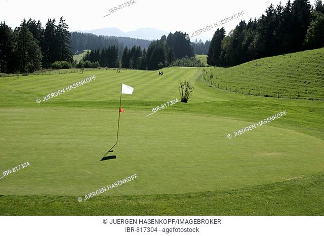 Golf Course Auf der Gsteig, on the Gsteig in Lechbruck am See, view from the 5th green to the 6th fairway, Allgaeu, Bavaria, Germany, Europe