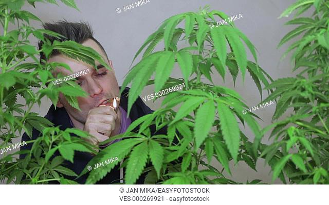 Casual young man lighting up and smoking Marijuana joint