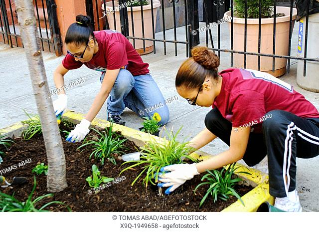 Hispanic community service volunteers of the Harlem Spanish Manhattan Seventh Day Adventist Church plant flowers in an East Harlem neighborhood public sidewalk...