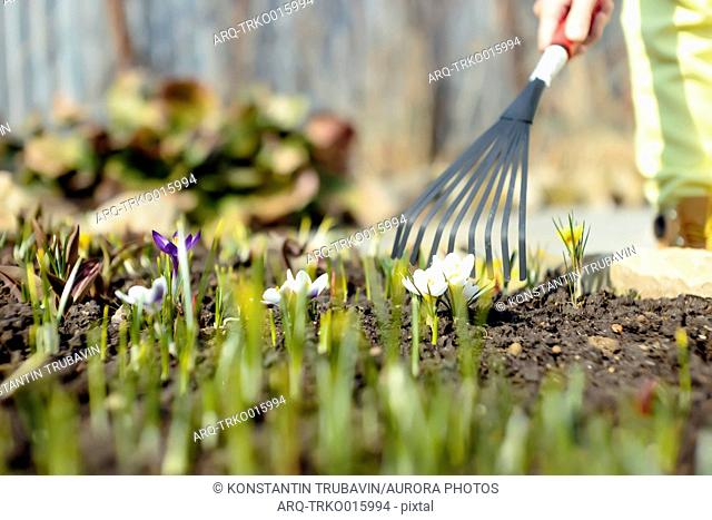 Surface level shot of person raking in garden, Moscow, Russia