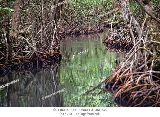 Channel to entrance at The Ngobe Bugle Indian Village Of Salt Creek Near Bocas Del Toro Panama. Salt Creek (in Spanish: Quebrada Sal) is a Ngöbe Buglé village...