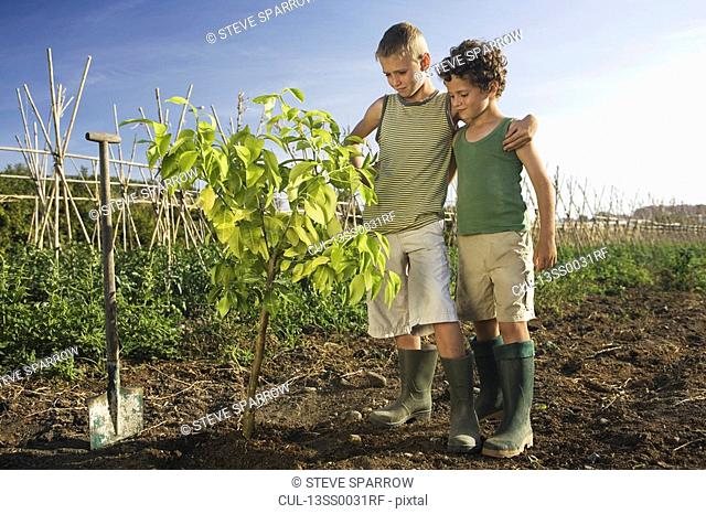 Two boys planting tree