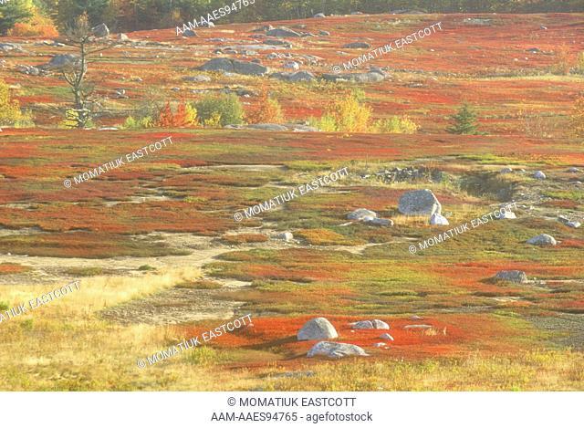 Autumn Wild Blueberry Fields/Harvested Mechanically/Maine