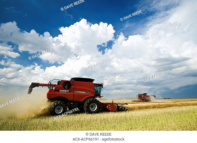 combine harvesters work in a field during the canola harvest, near Dugald, Manitoba, Canada