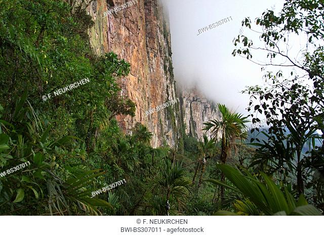 view along a steep face of the Roraima Tepui between forested slopes and cloudy top, Venezuela, Canaima National Park, Roraima Tepui
