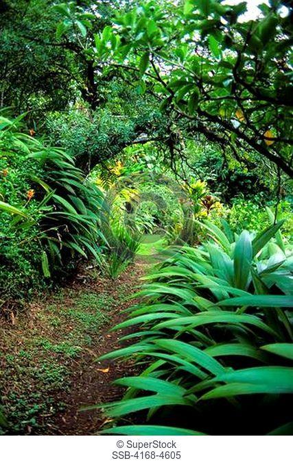 USA, Hawaii, Oahu, Kaiula, Haiku Gardens