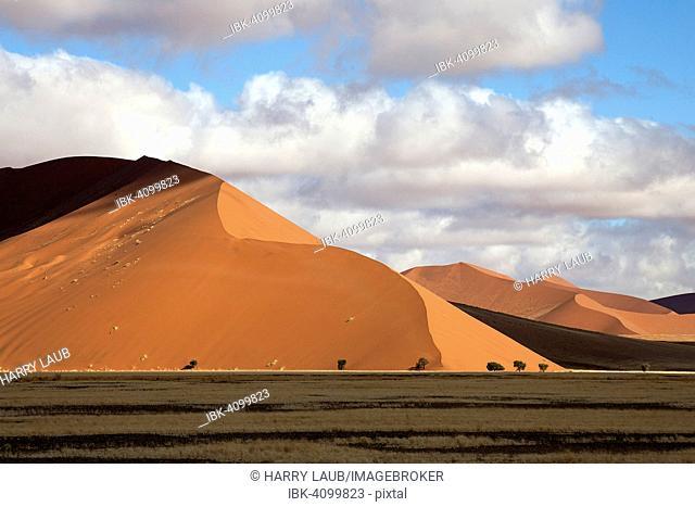 Sand dunes, Dune 45, Sossusvlei, Namib Desert, Namib-Naukluft National Park, Namibia