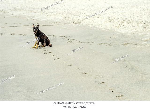 dog and footprints on the sand looking at camera