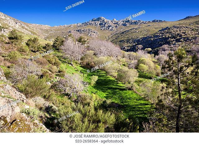 The Horcajo in the Sierra de Gredos. Mijares. Avila. Castilla Leon. Spain. Europe