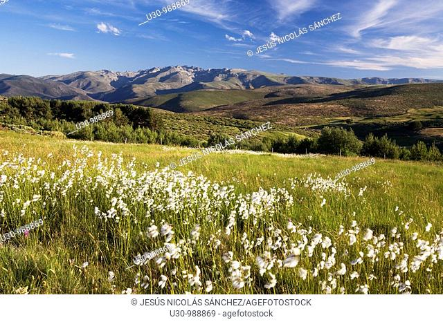 Mountains of the Sierra de Gredos Regional Park view from Peña Negra pass, that cross the Sierra de Villafranca  At the end of the image the massif of Almanzor...