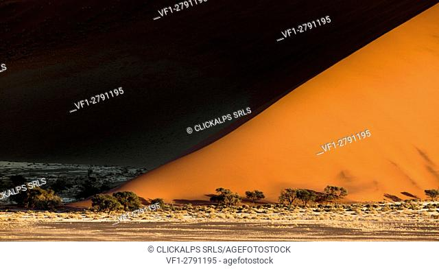 Sunrise from dune 45 in Sossuvlei, Namib Naukluft National Park. Contrast on dunes enhanced by early morning lights
