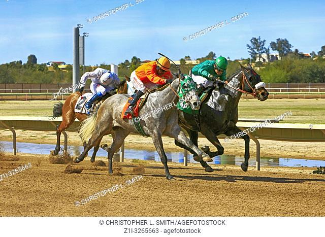 Horse racing at the Rillito Park race track in Tucson AZ