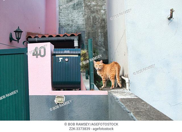 Red cat on a wall