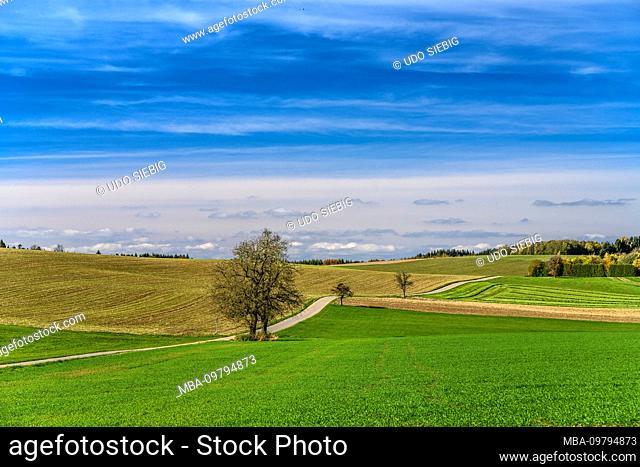 Germany, Baden-Württemberg, Linzgau, Lake Constance, Heiligenberg, cultural landscape on the panoramaweg