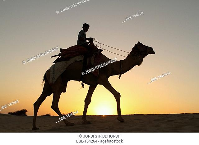 Indian boy on camel at sunset in the desert