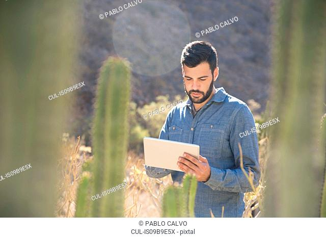 Young male hiker looking at digital tablet in sunlit valley, Las Palmas, Canary Islands, Spain
