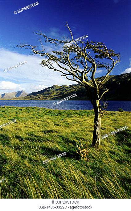 Kylemore Lake County Galway Ireland