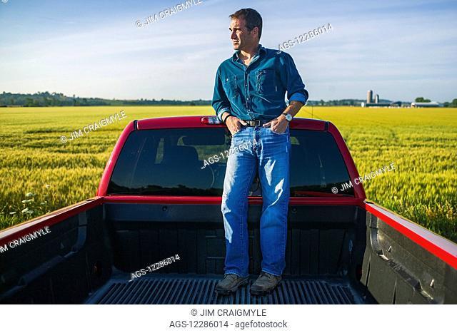 Farmer standing in back of pickup truck looking at barley field; Bradford, Ontario, Canada