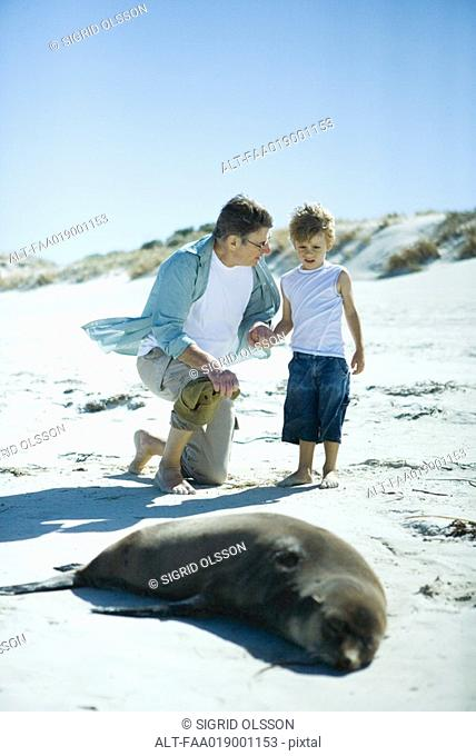 Man and boy looking at seal on beach