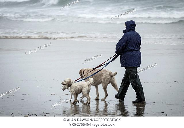 Woman walking dogs on the beach in the rain at Saltburn by the sea, North Yorkshire, England, United Kingdom