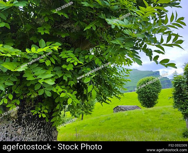 Spring landscape of pasiegas cabins and meadows in the Miera Valley in the Autonomous Community of Cantabria. Spain, Europe
