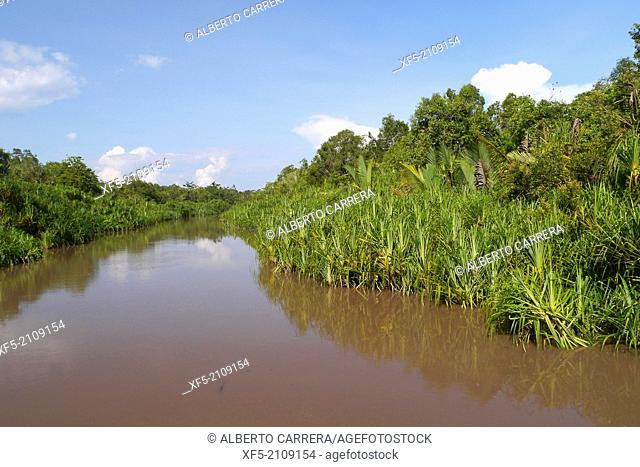 Sekonyer River, Tanjung Puting National Park, Kalimantan, Borneo, Indonesia