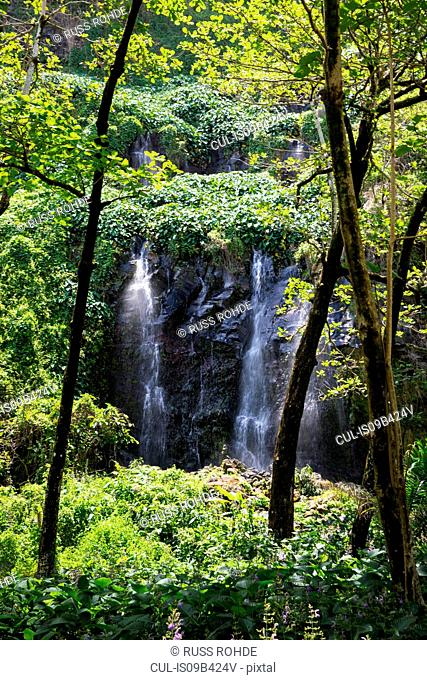 Rainforest waterfall flowing over rock face, Reunion Island