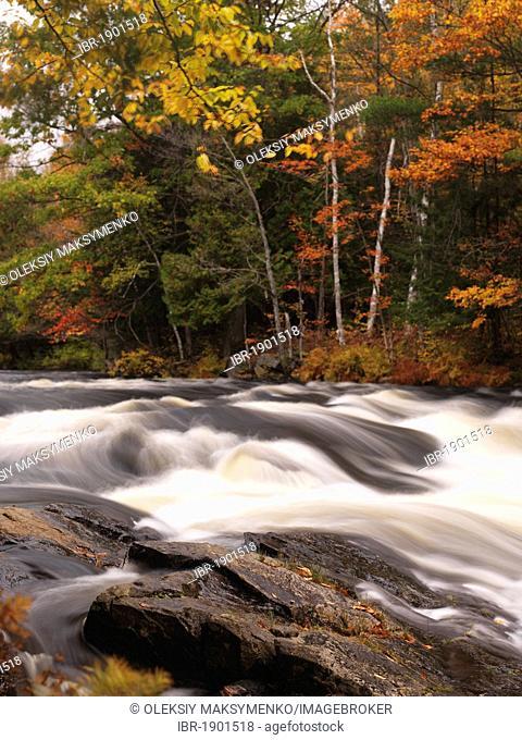 Oxtongue river rapids, autumn, Algonquin, Ontario, Canada, North America